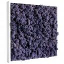 Tableau végétal stabilisé Lichen Violet 40x40cm