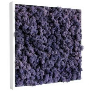 http://www.materiel-mur-vegetal.fr/416-793-thickbox/tableau-vegetal-stabilise-lichen-violet-40x40cm.jpg