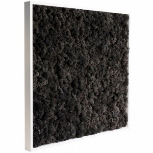http://www.materiel-mur-vegetal.fr/420-798-thickbox/tableau-vegetal-stabilise-lichen-noir-60x60cm.jpg