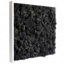 Tableau végétal stabilisé Lichen Noir 40x40cm