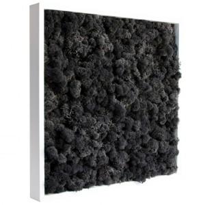 http://www.materiel-mur-vegetal.fr/421-799-thickbox/tableau-vegetal-stabilise-lichen-noir-40x40cm.jpg