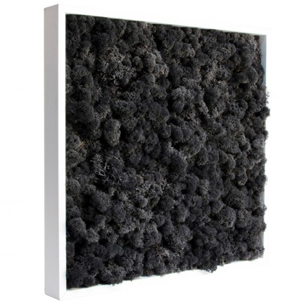 tableau v g tal stabilis lichen noir 40x40cm mat riel mur v g. Black Bedroom Furniture Sets. Home Design Ideas