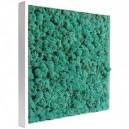 Tableau végétal stabilisé Lichen Pacific 40x40cm
