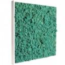 Tableau végétal stabilisé Lichen Pacific 60x60cm