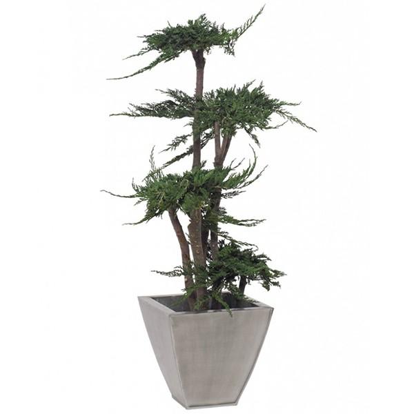 arbre juniperus stabilis 100cm mat riel mur v g. Black Bedroom Furniture Sets. Home Design Ideas