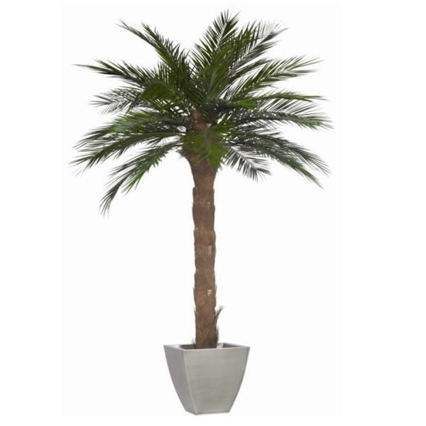 94 palmier artificielle pas cher palmier artificiel pas cher ou d 39 occasion sur palmier. Black Bedroom Furniture Sets. Home Design Ideas