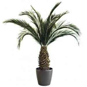 palmier 200 cm