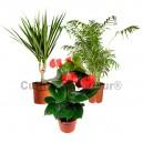 Pack 3 plantes dépolluantes d'intérieur V1