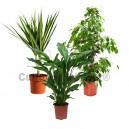 Pack 3 plantes dépolluantes d'intérieur V2