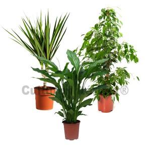 http://www.materiel-mur-vegetal.fr/523-981-thickbox/pack-3-plantes-depolluantes-dinterieur-v2.jpg