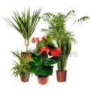 Pack 5 plantes dépolluantes d'intérieur V1