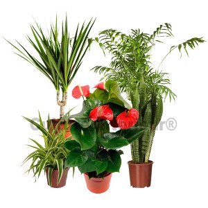 http://www.materiel-mur-vegetal.fr/524-982-thickbox/pack-5-plantes-depolluantes-dinterieur-v1.jpg