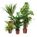 Pack 5 plantes dépolluantes d'intérieur V2