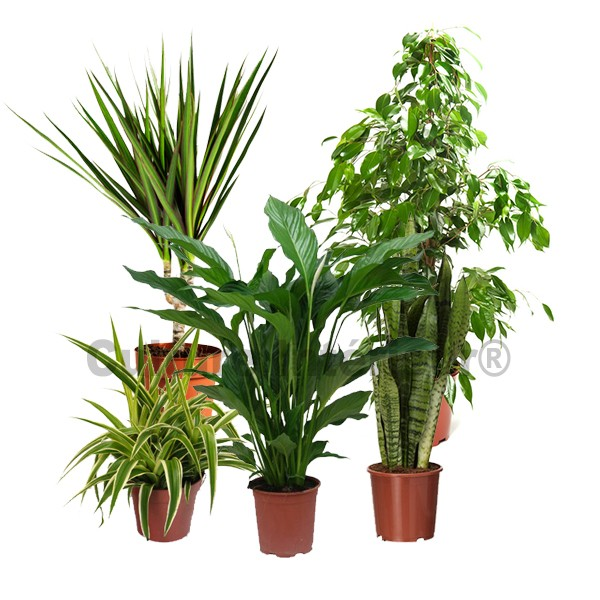 Les plantes d polluantes d 39 int rieur for Plante verte d interieur photo