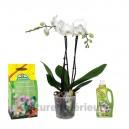 Pack Orchidée blanche 2 branches, terreau & engrais