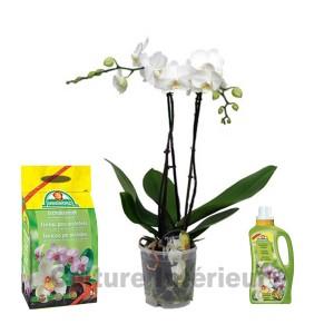 http://www.materiel-mur-vegetal.fr/526-984-thickbox/pack-orchidee-blanche-2-branches-terreau-engrais.jpg