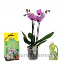 Pack Orchidée rose 2 branches, terreau & engrais