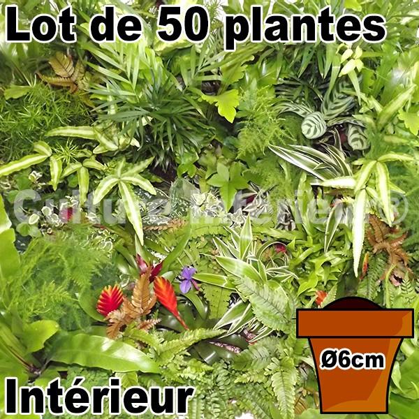 lot de 50 plantes pot 6cm pour mur v g tal int rieur mat riel mur v g. Black Bedroom Furniture Sets. Home Design Ideas