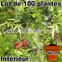 Lot de 100 plantes pot Ø6cm pour mur végétal intérieur