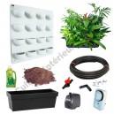 Flowall Mini Garden Blanc avec plantes d'intérieur