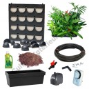 Flowall Mini Garden Noir avec plantes d'intérieur
