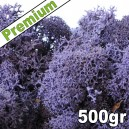 Lichen Scandinave stabilisé Violet 500gr Premium