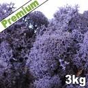 Lichen Scandinave stabilisé Violet 3kg Premium