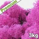 Lichen Scandinave stabilisé Rose 3kg Premium