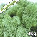 Lichen Scandinave stabilisé Vert Menthe 3kg Premium