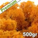 Lichen Scandinave stabilisé Orange 500gr Premium