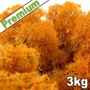 Lichen Scandinave stabilisé Orange 3kg Premium