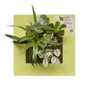 Cadre végétal Arden Flore Vert Anis 30x30cm