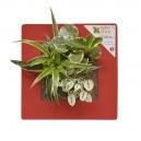 Cadre végétal Arden Flore Vert Rouge 30x30cm