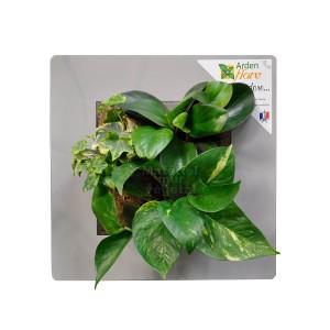 http://www.materiel-mur-vegetal.fr/872-1530-thickbox/cadre-vegetal-gris-perle-30x30cm-garden-and-the-city.jpg