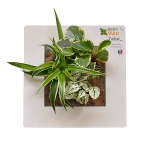 http://www.materiel-mur-vegetal.fr/873-1533-thickbox/cadre-vegetal-blanc-30x30cm-garden-and-the-city.jpg