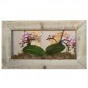 Cadre végétal Wooden 44x25cm avec Orchidées