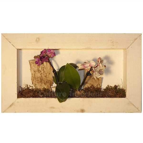 Cadre v g tal wooden blanc 44x25cm avec orchid es for Flowall pas cher