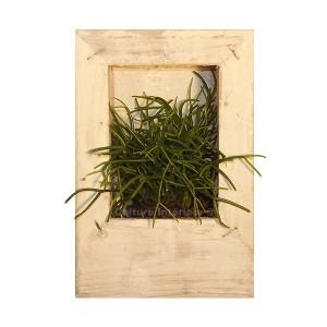 http://www.materiel-mur-vegetal.fr/883-1572-thickbox/cadre-vegetal-wooden-blanc-15x10cm-avec-succulente.jpg