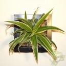 Cadre végétal Be Green Noir 20x20cm avec Chlorophytum