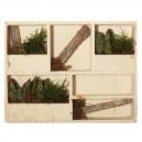 Cadre Etagère végétale Wooden Blanc 38x29cm avec Succulentes