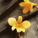 Boite 5 têtes d'Orchidées Dendrobium stabilisées Jaunes Safran