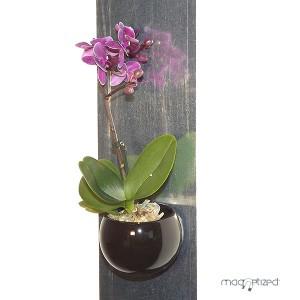 http://www.materiel-mur-vegetal.fr/903-1618-thickbox/cache-pot-magnetique-o8cm-noir.jpg