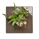 Cadre végétal Arden Flore Artichaud 30x30cm