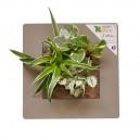 Cadre végétal Arden Flore Lin 30x30cm