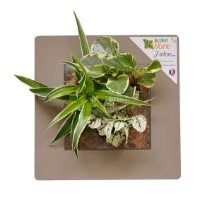http://www.materiel-mur-vegetal.fr/906-1633-thickbox/cadre-vegetal-lin-30x30cm-garden-and-the-city.jpg