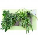 Cadre végétal Arden Flore Double Vert Anis 49x30cm