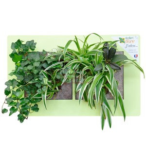 http://www.materiel-mur-vegetal.fr/907-1634-thickbox/cadre-vegetal-double-horizontal-vert-anis-49x30cm-garden-and-the-city.jpg