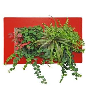 http://www.materiel-mur-vegetal.fr/908-1636-thickbox/cadre-vegetal-double-horizontal-rouge-49x30cm-garden-and-the-city.jpg