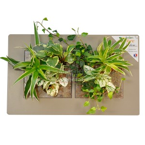 http://www.materiel-mur-vegetal.fr/910-1644-thickbox/cadre-vegetal-double-horizontal-lin-49x30cm-garden-and-the-city.jpg