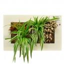 Cadre végétal Arden Flore Double Blanc 49x30cm